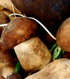 Hintergrund von Porcini-Pilzen Stockbilder