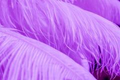 Hintergrund von purpurroten Farbfedern Lizenzfreies Stockfoto