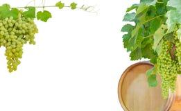 Hintergrund von Reben mit Trauben, Eichenfaß und Tafeltrauben Stockbild