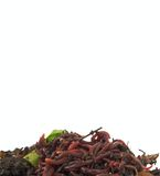 Hintergrund von Regenwürmern im Kompost auf Weiß Stockbild