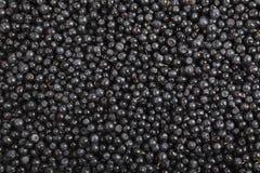 Hintergrund von reifen Beeren von Blaubeeren Für Ihre Auslegung Lizenzfreie Stockfotos