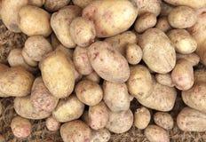 Hintergrund von rohen Kartoffeln für Verkauf im Lebensmittelgeschäft Lizenzfreie Stockfotos