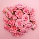 Hintergrund von rosa Rosen Flache Lage, Draufsicht Stockfotografie