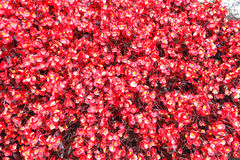 Hintergrund von roten Anlagen Lizenzfreies Stockfoto