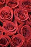 Hintergrund von roten Rosen mit Regentropfen Lizenzfreies Stockfoto