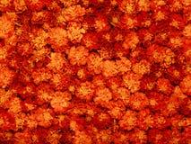 Hintergrund von roten und gelben Blumen. Lizenzfreies Stockfoto