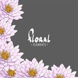 Hintergrund von schönen empfindlichen Chrysanthemen Stockfotografie
