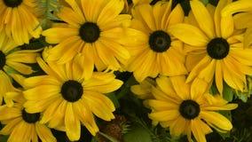 Hintergrund von schönen gelben Blumen Die Ansicht ist von der Spitze horizontal stock video footage