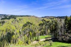 Hintergrund von Tannenbäumen Stockfotos