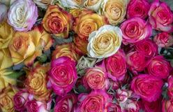Hintergrund von verschiedenen Blumen der unterschiedlichen Farbnahaufnahme stockfotos