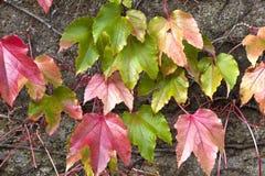Hintergrund von warmen farbigen Blättern Lizenzfreies Stockbild
