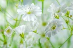 Hintergrund von weißen und grünen Wildflowers schön Stockfotografie