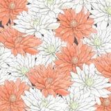 Hintergrund von weißen und orange Chrysanthemen Lizenzfreies Stockbild