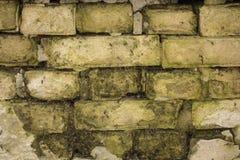 Hintergrund von weißen Ziegelsteinen mit Moos Stockfoto