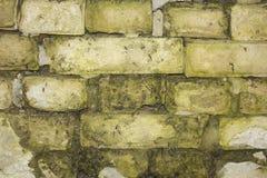 Hintergrund von weißen Ziegelsteinen mit Moos Lizenzfreie Stockfotos