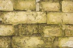 Hintergrund von weißen Ziegelsteinen mit Moos Stockbild