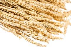Hintergrund von Weizenähren Stockbilder
