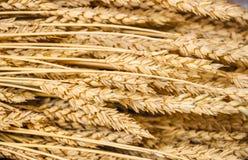 Hintergrund von Weizenähren Lizenzfreie Stockfotografie
