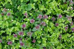 Hintergrund von wilden Blumen Lizenzfreie Stockfotografie