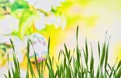Hintergrund Wiese im Frühjahr Lizenzfreie Stockbilder