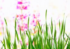 Hintergrund Wiese im Frühjahr Stockbilder