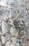 Hintergrund-Zement-Muster Stockbilder