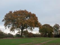 Hintergrundbauernhof-Landschaftsbaum des Herbstes verlässt bewölkter schwermütiger gras Lizenzfreies Stockbild