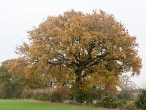 Hintergrundbauernhof-Landschaftsbaum des Herbstes verlässt bewölkter schwermütiger gras Stockfotos