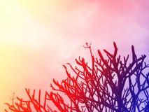 Hintergrundbaum stockbild
