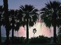 Hintergrundbeleuchtet, Sonnenuntergang, im Vordergrund drei Palmen im Schattenbild stockbild