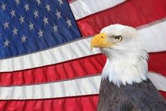 Hintergrundbeleuchtete amerikanische Flagge mit Weißkopfseeadler in Forground Stockbild