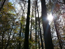 Hintergrundbeleuchtete Bäume Stockfotos