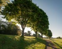 Hintergrundbeleuchtete Bäume Stockfoto