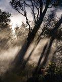 Hintergrundbeleuchtete Bäume stellen drastische Schatten auf dem Dampf her, der bei Kil steigt stockbilder