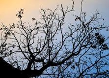 Hintergrundbeleuchtete Bäume und Niederlassungen auf Abendzeit Stockfotos