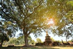 Hintergrundbeleuchtete Fotografie, großer alter Baum und alte Pagode Lizenzfreies Stockbild