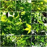 Hintergrundbeleuchtete Hintergrundcollage Greenleaves von Frühlingsfotos Lizenzfreie Stockfotografie