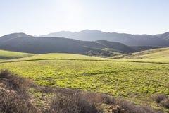 Hintergrundbeleuchtete Kalifornien-Wiese Lizenzfreies Stockbild