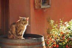 Hintergrundbeleuchtete Katze lizenzfreie stockbilder