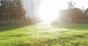 Hintergrundbeleuchtete Sonne und Baumaste stock footage