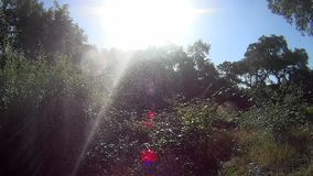 Hintergrundbeleuchtete Sonnenwassertropfen stock video