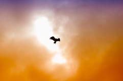 Hintergrundbeleuchteter Adler Lizenzfreie Stockfotos