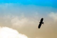 Hintergrundbeleuchteter Adler Lizenzfreie Stockbilder