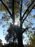 Hintergrundbeleuchteter Baum Lizenzfreie Stockfotos