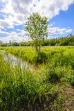 Hintergrundbeleuchtetes Bild eines kleinen Stromes in einer niederländischen Polderlandschaft Stockfoto