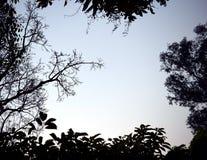 Hintergrundbeleuchtetes Treetop Schwarzes mögen einen Bilderrahmen Lizenzfreie Stockfotos
