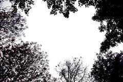 Hintergrundbeleuchtetes Treetop Schwarzes mögen einen Bilderrahmen Lizenzfreies Stockbild