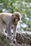 Hintergrundbeleuchtung des Affen Lizenzfreie Stockbilder