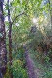 Hintergrundbeleuchtung eines schmalen Weges mitten in einem Abhang umfasste w Stockfoto