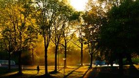 Hintergrundbeleuchtung im Park Stockfoto